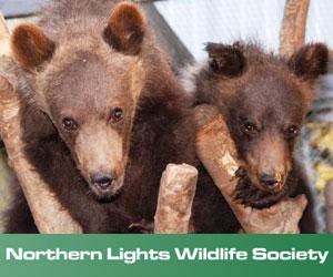 Northern Lights Wildlife Society